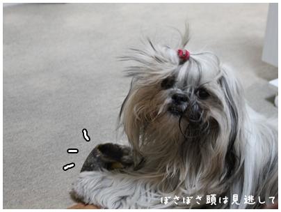 2010-01-11-01.jpg