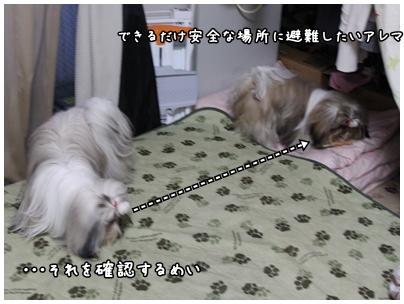 2010-01-13-01.jpg