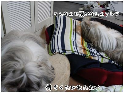 2010-01-22-06.jpg