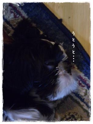 2010-01-31-09.jpg