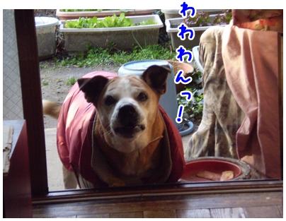2010-02-07-05.jpg