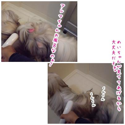 2010-02-21-01.jpg
