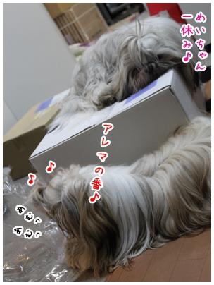 2010-03-03-10.jpg