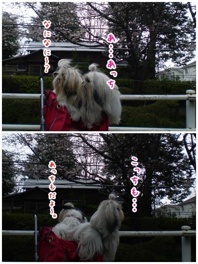 2010-03-28-05.jpg