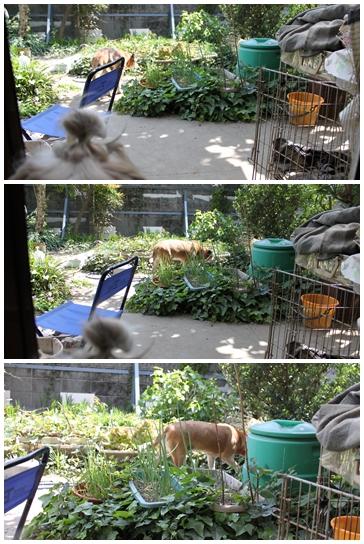 2010-05-07-07.jpg