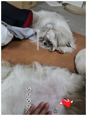 2010-05-25-10.jpg