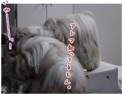 2010-06-14-03.jpg