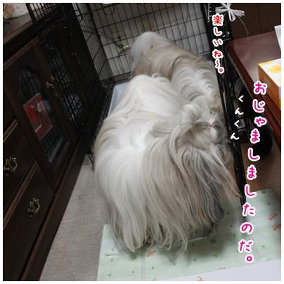 2010-07-03-05.jpg
