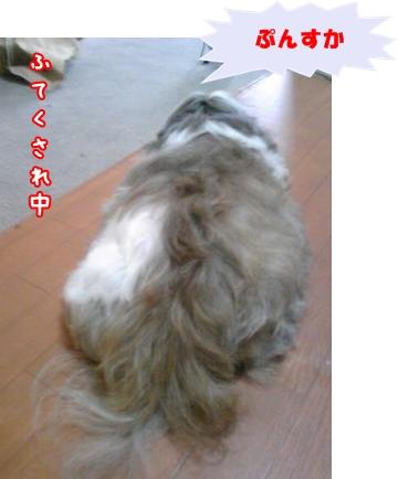 807071035_convert_20081127215425.jpg