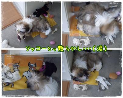 cats2009-0-5-17-02.jpg