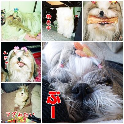 cats2009-01-14-03.jpg