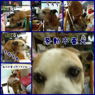 cats2009-02-13-01.jpg