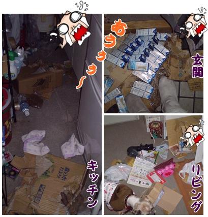 cats2009-02-17-01.jpg