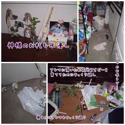 cats2009-02-25-01.jpg