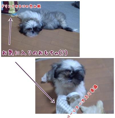 cats2009-03-23-01.jpg