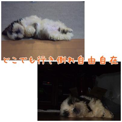 cats2009-03-23-02.jpg
