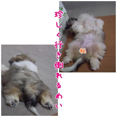 cats2009-03-25-01.jpg