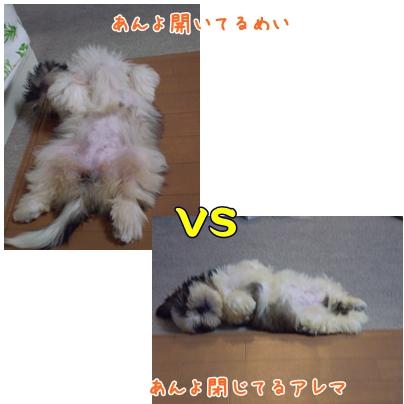 cats2009-03-26-01.jpg