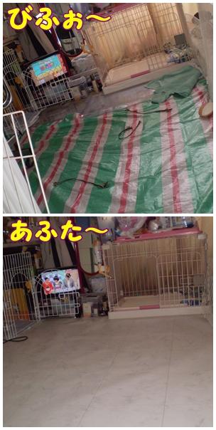 cats2009-03-26-03.jpg