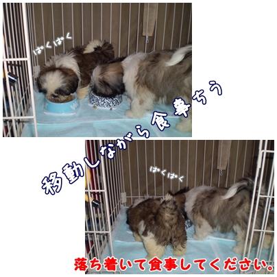 cats2009-0318-01.jpg