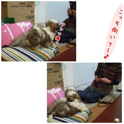 cats2009-04-02-01.jpg