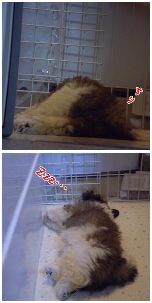 cats2009-04-05-0.jpg