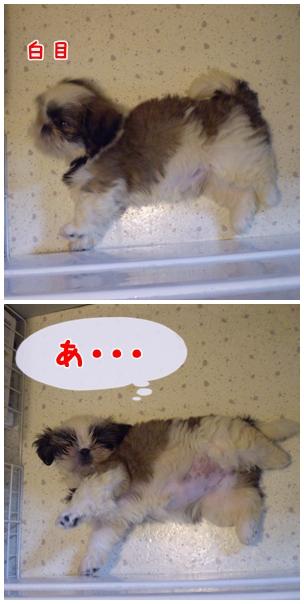 cats2009-04-05-02.jpg