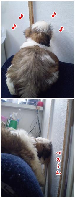 cats2009-04-08-01.jpg