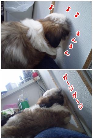 cats2009-04-08-02.jpg