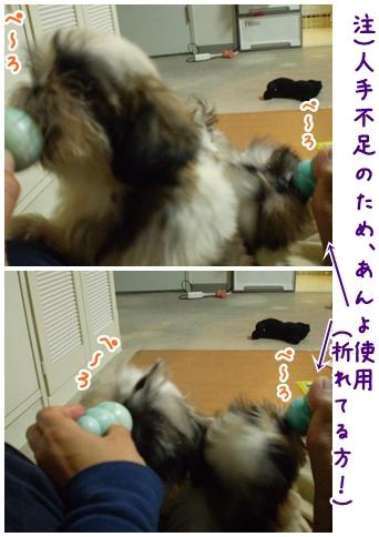 cats2009-04-10-01.jpg