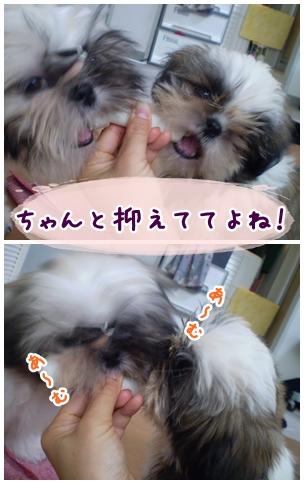 cats2009-04-12-01.jpg