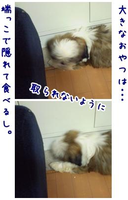 cats2009-04-12-03.jpg