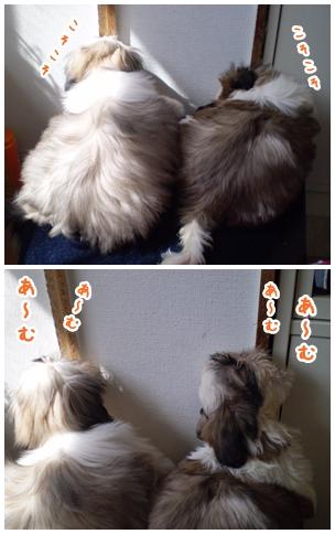 cats2009-04-13-01.jpg