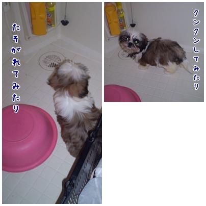 cats2009-04-17-01.jpg