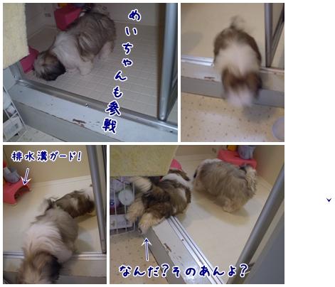 cats2009-04-17-02.jpg