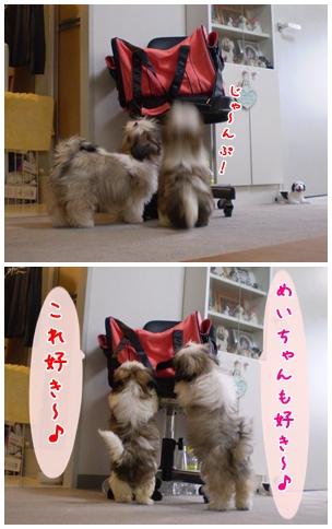 cats2009-04-21-01.jpg