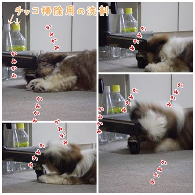cats2009-04-22-01.jpg