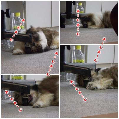cats2009-04-22-02.jpg