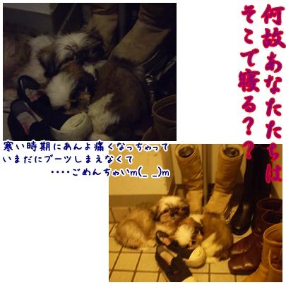 cats2009-04-26-01.jpg