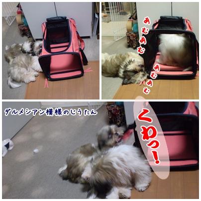 cats2009-04-26-02.jpg