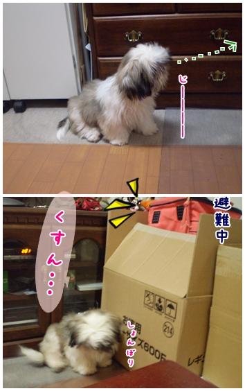 cats2009-04-26-03.jpg