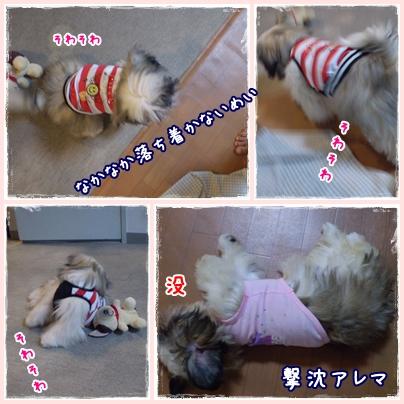 cats2009-05-02-02.jpg