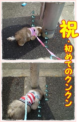 cats2009-05-03--1.jpg
