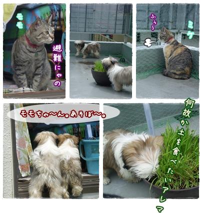 cats2009-05-10-02.jpg