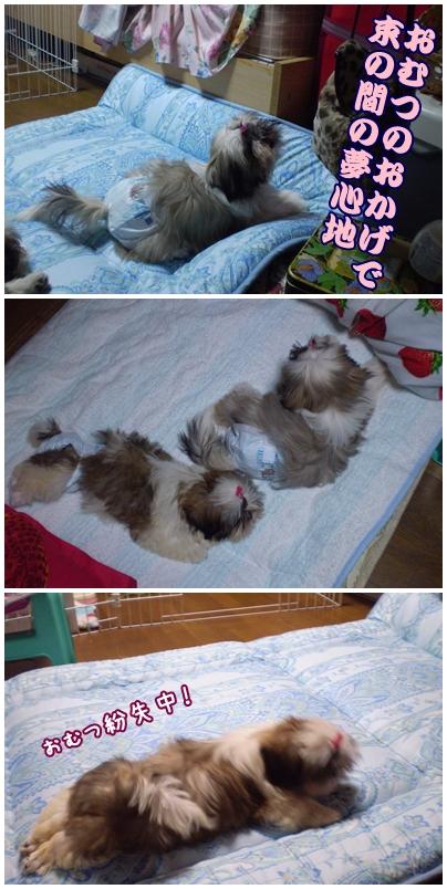 cats2009-05-10-03.jpg