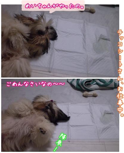 cats2009-05-14-01.jpg