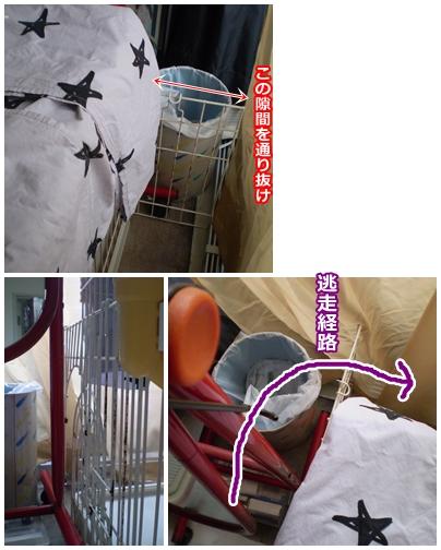 cats2009-05-14-03.jpg