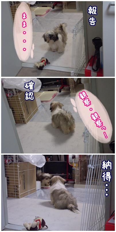 cats2009-05-19-01.jpg