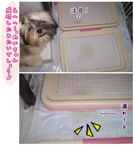 cats2009-05-21-02.jpg