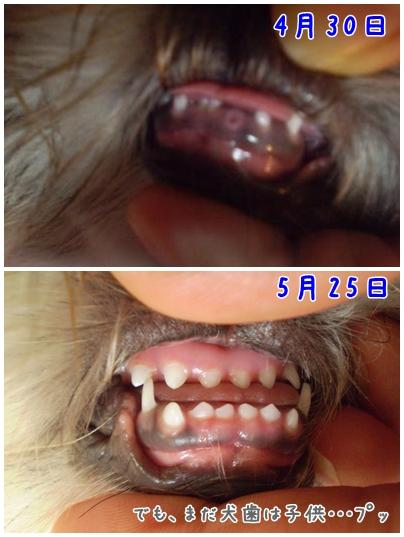 cats2009-05-27-02.jpg
